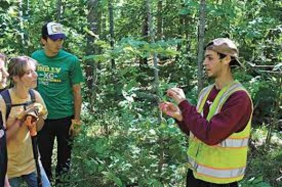 Houghton High School students learn to identify buckthorn, an invasive tree, at Michigan Tech Trails.