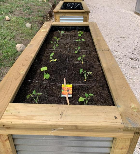 Raised beds, built by the Career & Technical Education (CTE) class, are prepped and filled with Mels Mix and planted with pumpkins for a fall harvest.